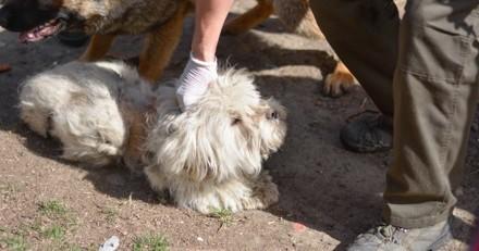Ils achètent des animaux sur leboncoin : ce que découvrent les secours dans l'appartement est cauchemardesque