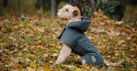 Habiller son chien en hiver : bonne ou mauvaise idée de lui mettre un manteau pour le protéger du froid ?