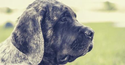 Villepinte : grâce à une vidéo, trois chiens battus par leur propriétaire ont été sauvés