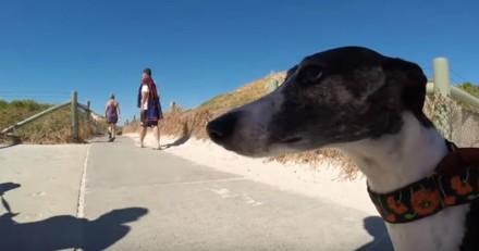 Ce chien  passe une journée de rêve à la plage (Vidéo du jour)
