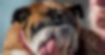 Le chien le plus moche du monde a été élu, et c'est lui !