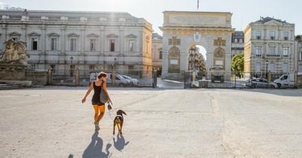 Si vous voulez vivre tranquille avec votre chien, c'est dans cette ville qu'il faut habiter
