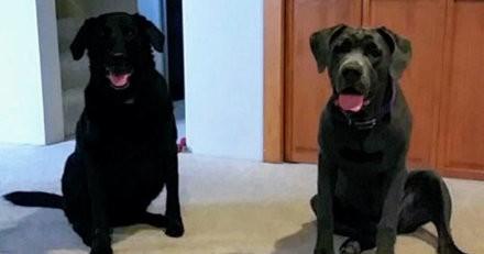 Suite au décès de leurs chiens, ils reçoivent quelque chose qui les laissent sans voix