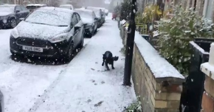 Ce chien qui court dans la neige est la vidéo que vous devez voir aujourd'hui (Vidéo du jour)