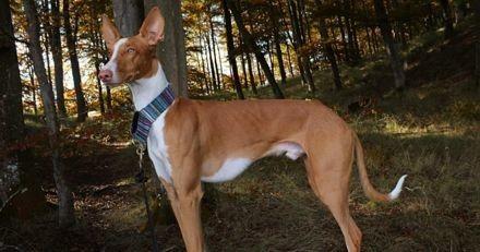 Halloween : quand elle voit ce à quoi ressemble son chien, son cœur ne fait qu'un bond !