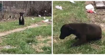 Des enfants jettent des pierres sur une chienne errante, jamais ils n'auraient imaginé la suite (Vidéo)