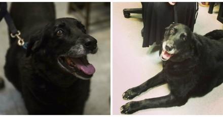 Elle déclare sa chienne morte, 10 ans après elle reçoit un appel et est sous le choc