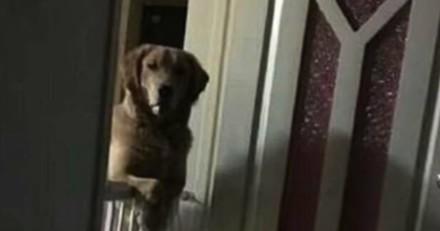 Ils remarquent que leur chien les fixe pendant la nuit, la raison est terrible