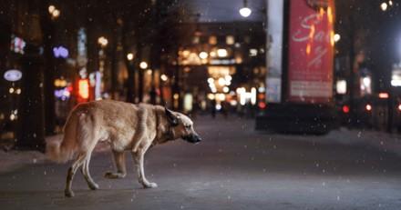 Le livreur de pizza voit un chien lui foncer dessus, une femme hurle de lui tirer dessus et il comprend son erreur