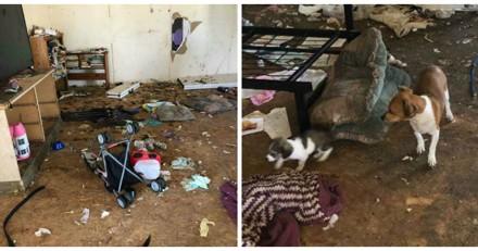 Les secours entrent dans une maison pour sauver des chiens, jamais ils n'oublieront ce qu'ils ont vu