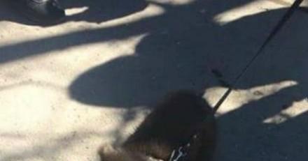 Les passants voient un homme avec un chien en laisse, puis réalisent avec horreur que ce n'est pas un chien