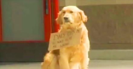 Ils voient un chien devant un centre commercial avec une pancarte, s'approchent et n'en reviennent pas