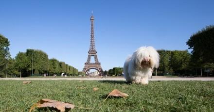 Budget participatif : votez pour que Paris soit plus agréable pour les chiens citadins !