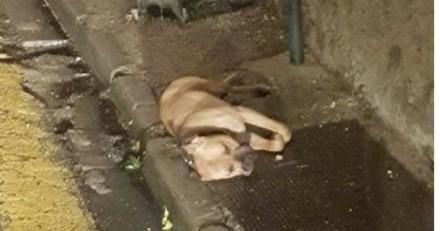 1 mois de prison seulement pour l'homme qui a pendu son chien à Nîmes