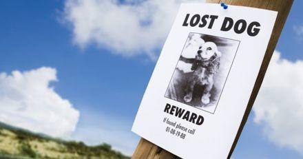 Alerte arnaque : des réponses frauduleuses aux annonces de chiens et chats perdus