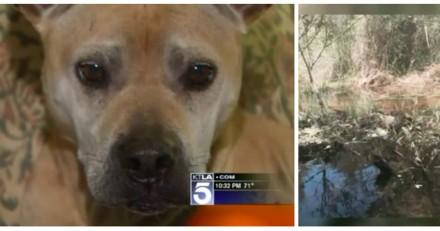 Elle croit son chien mort pendant une randonnée, 9 jours plus tard elle est bouche bée face à ce qu'elle voit