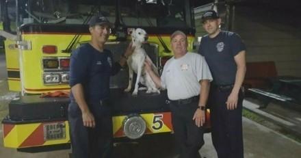 Un chien perdu trouve un job dans une caserne de pompiers