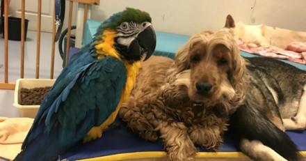 Ce chien et ce perroquet handicapés sont les meilleurs amis du monde (Vidéo du jour)