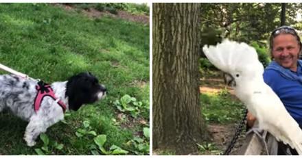Ce perroquet est capable d'aboyer comme un chien (Vidéo du jour)