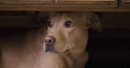 Mon chien a peur des invités : comment réagir ?
