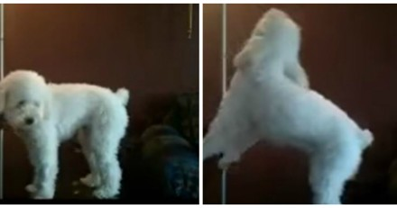 Les voisins se plaignent du bruit que fait son chien, il met une caméra et n'en revient pas !