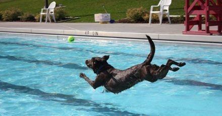 Cette piscine municipale ouvre ses portes aux chiens pour une belle cause