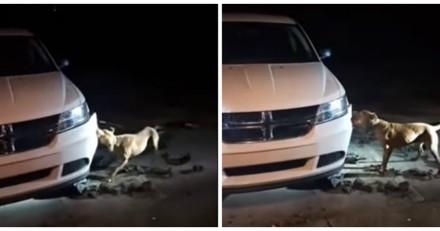 Un chien abîme sa voiture, elle fait une demande à peine croyable au policier présent sur place
