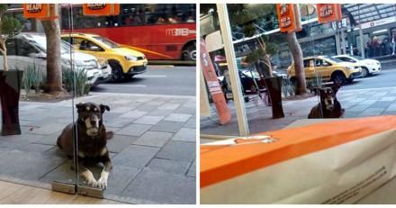 Elle voit un chien devant la pizzeria, s'approche et explose de rire en voyant son collier