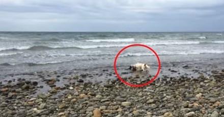 Son chien devient totalement fou en regardant la mer : il s'approche et n'en croit pas ses yeux