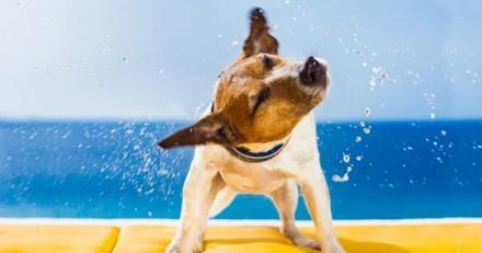 Petit Futé : « Vacances avec ou sans votre animal », le guide à ne pas manquer pour un été serein !