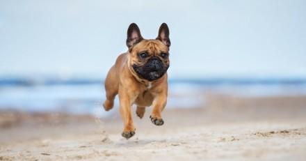Eté 2017 : les plages françaises autorisées aux chiens