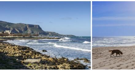 Sur la plage, un chien s'approche de lui mais quand il voit ce qu'il a autour du cou il a les larmes aux yeux