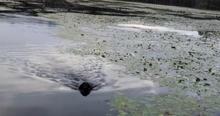 Un homme panique quand son chien plonge dans le lac, puis il voit la créature dans sa bouche…