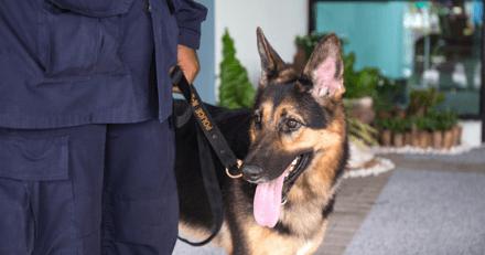 """Toulouse : chez une """"nourrice"""", le chien policier fait une grosse découverte dans une armoire"""