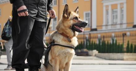 Il voit un chien policier s'approcher de lui et joue avec : 3 minutes plus tard, il réalise son erreur…
