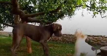 Trop petit pour attraper la pomme de ses rêves, ce chien a pu compter sur son copain (Vidéo du jour)