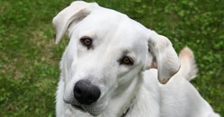 Votre chien préfère-t-il les chiens ou les humains ?