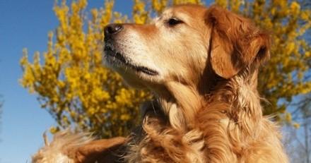 5 dangers du printemps pour le chien
