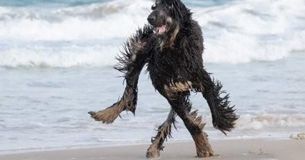 Cette photo perturbe Internet : saurez-vous retrouver dans quel sens vont les pattes de ce chien ?