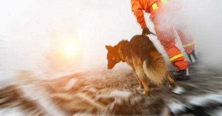 Ouragan Irma : l'indispensable intervention des chiens de recherche