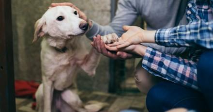 Agressif, peureux, traumatisé… le chien de refuge est-il irrécupérable ?