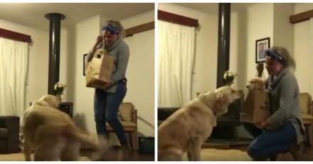 Elle rentre chez elle avec un nouveau chiot, la réaction du vieux chien fait fondre les cœurs (Vidéo)
