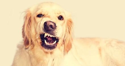 4 choses que les chiens peuvent ressentir avant qu'elles ne se produisent… et qui donnent la chair de poule !
