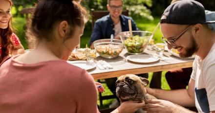Réunion de famille : un chien débarque, ce qui est indiqué sur son collier fait rire tout le monde
