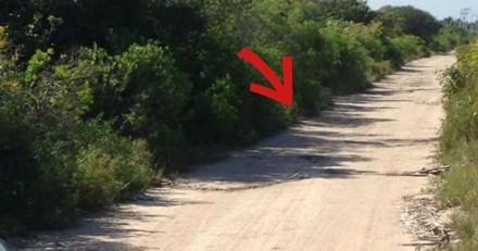 Elle voit une pile de déchets sur la route, en s'approchant elle a le choc de sa vie