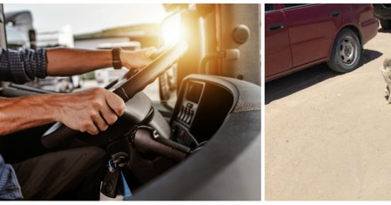 Le chauffeur voit quelque chose de bizarre sur la route, quand il comprend il freine le plus vite possible
