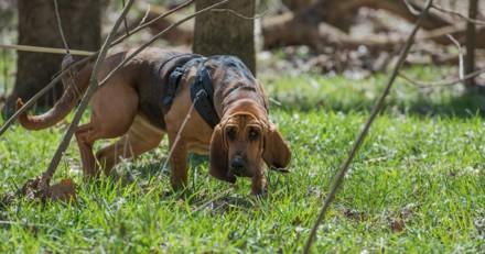 Un chien gendarme retrouve la trace d'une jeune femme disparue