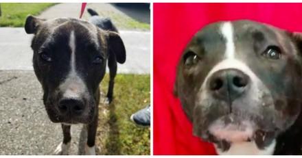 Une femme trouve un chien errant, elle appelle les secours qui ont le choc de leur vie (Vidéo)