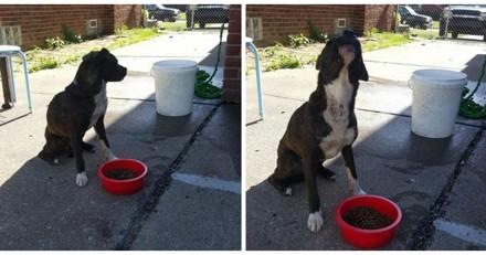 Elle donne à manger à un chien et remarque qu'il mange bizarrement, lui ouvre la bouche et a le choc de sa vie