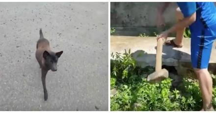 Il voit un chien dans la rue, le suit et se précipite sur un marteau !